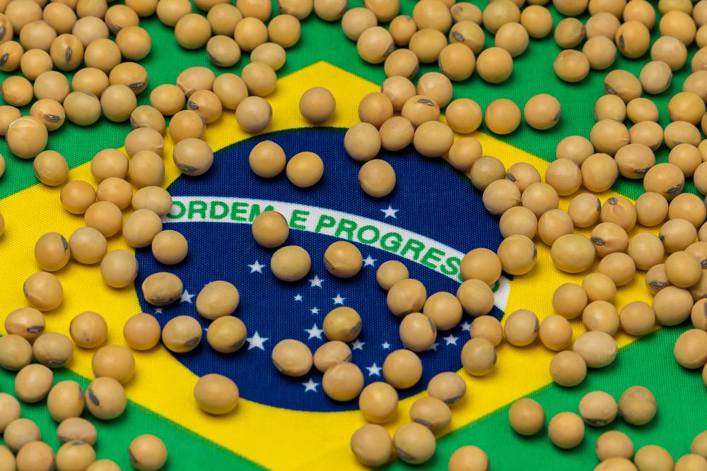 Apesar de ser o maior produtor mundial de soja, Brasil aumentou o volume de importações por baixa disponibilidade no mercado nacional. (Fonte: Shutterstock)