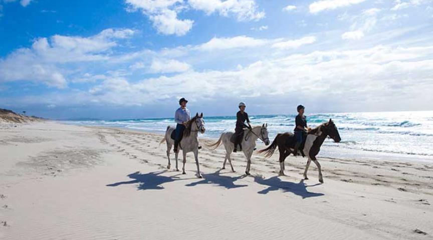 2020年 3~6個月遊學優惠方案!紐西蘭奧克蘭 海灘騎馬gogoenglish