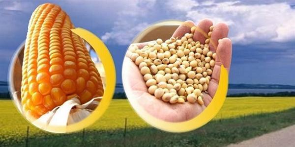 Pesquisadores sugerem recomendações de manejo da adubação para o cultivo de  sistema de produção soja-milho | Mato Grosso Econômico