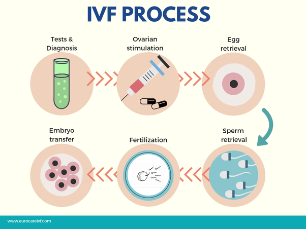 IVF cycle, Trend Health