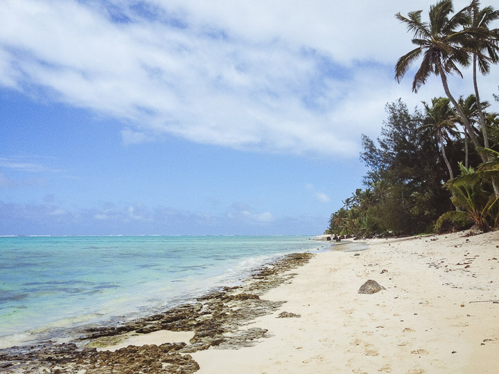 A palm tree lined beach in Rarotonga