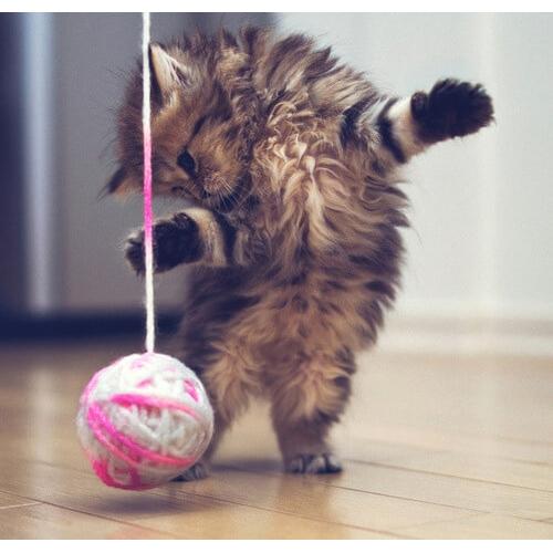 Коти дуже люблять грати в різні ігри