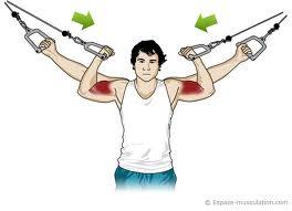 mouvements d'isolation pour musculation des biceps