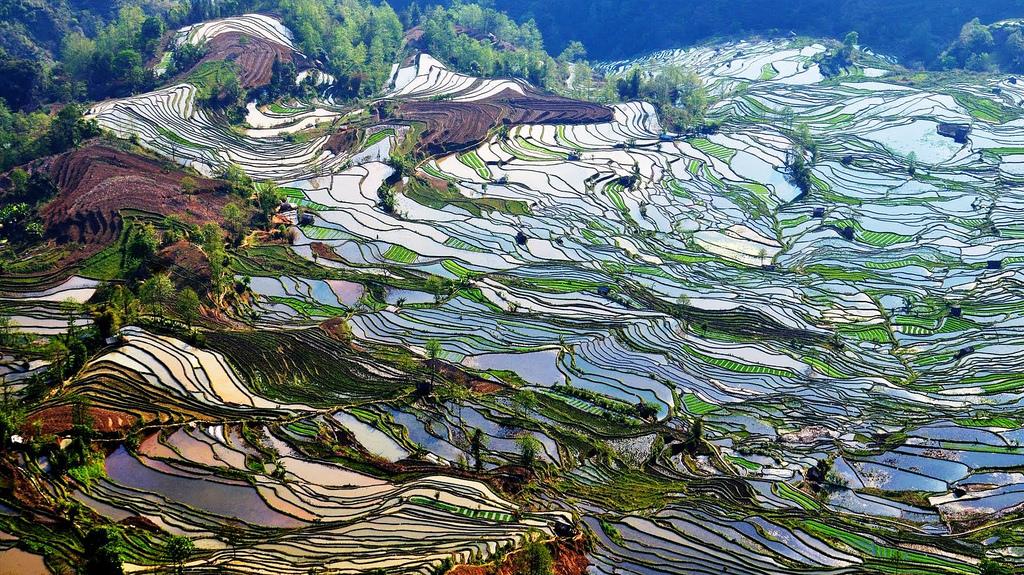 مصاطب الأرز المنحوتة باليد على المنحدرات. 0lyAzGgvHGKZVI2gmV7U