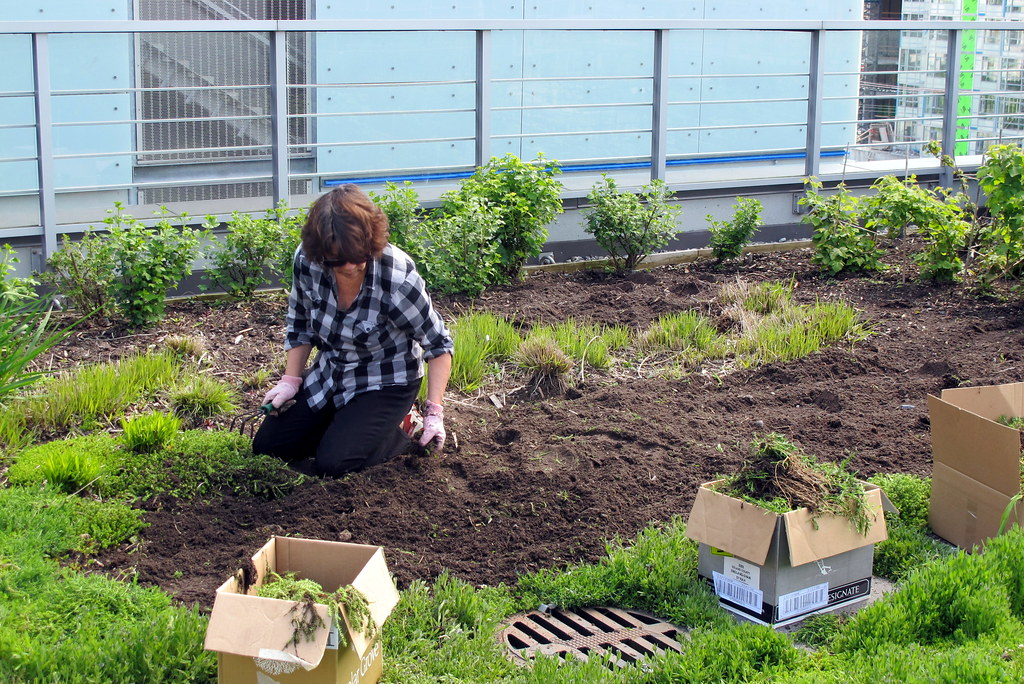 How to Start a Garden Business this Pandemic
