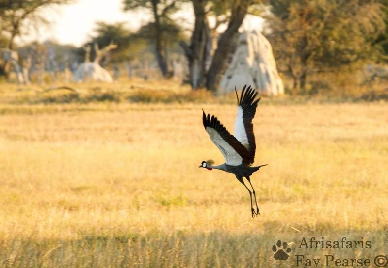 Hwange birds