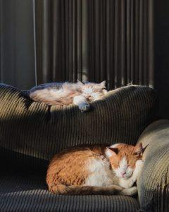 Two cats sleeping on a couch.