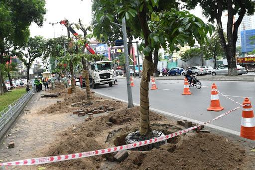 Việc di dời cây của công ty luôn có tỷ lệ sống cao