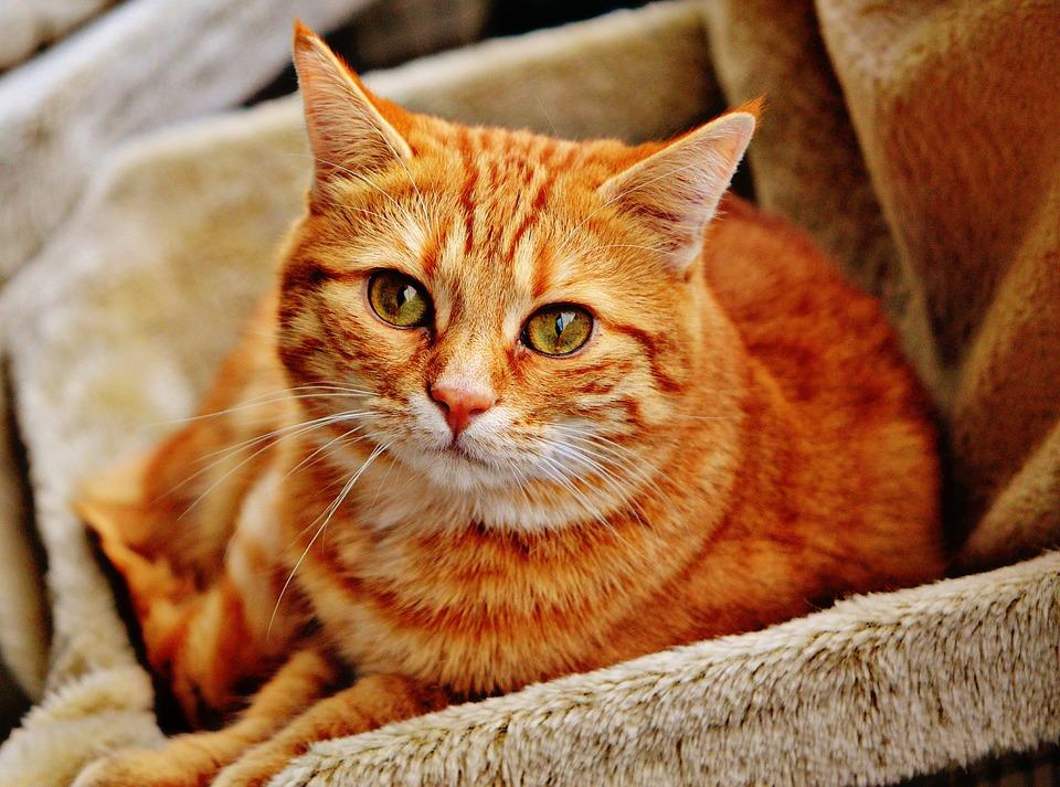 cat-1046544_960_720.jpg