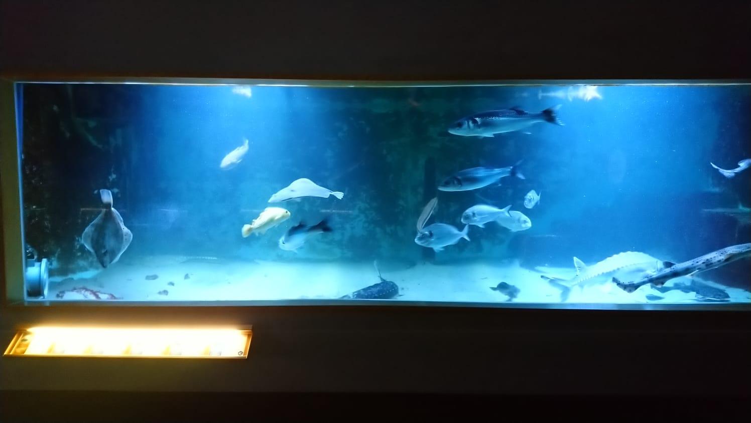 Wasserdichte Webcam für Livestreaming von HIKVISION im Einsatz.