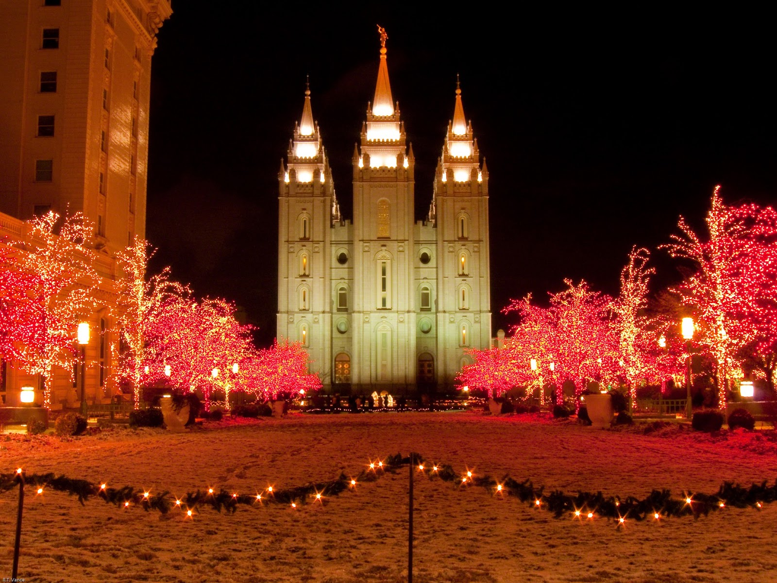 Christmas lights on trees in Salt Lake City, Utah