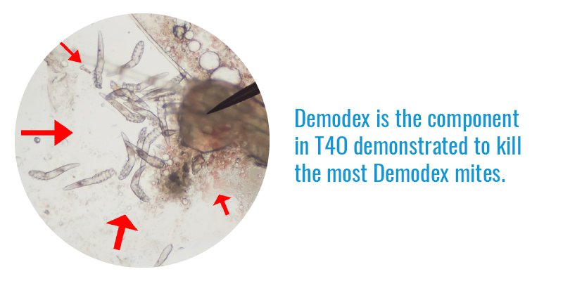 Terpinen-4-ol is the most active ingredient in TTO in exerting Demodex mite-killing effects.
