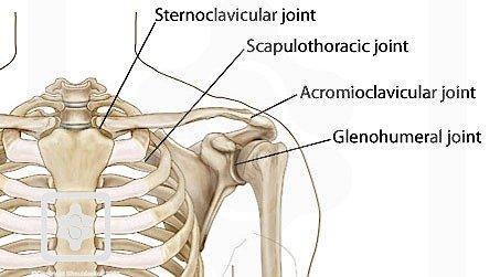 https://www.shoulderdoc.co.uk/images/uploaded/joints3.jpg
