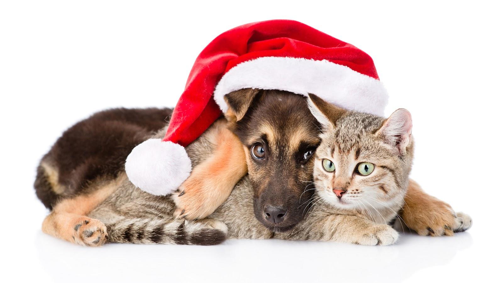 коты Собаки Новый год