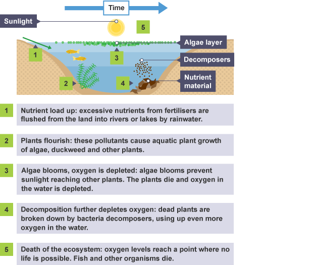igcse biology notes 416 understand that eutrophication
