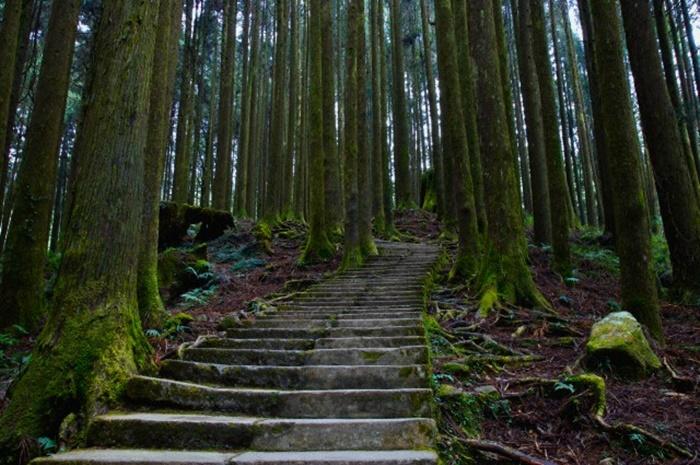 Du lịch Alishan Đài Loan bao đẹp hết các địa điểm núi rừng