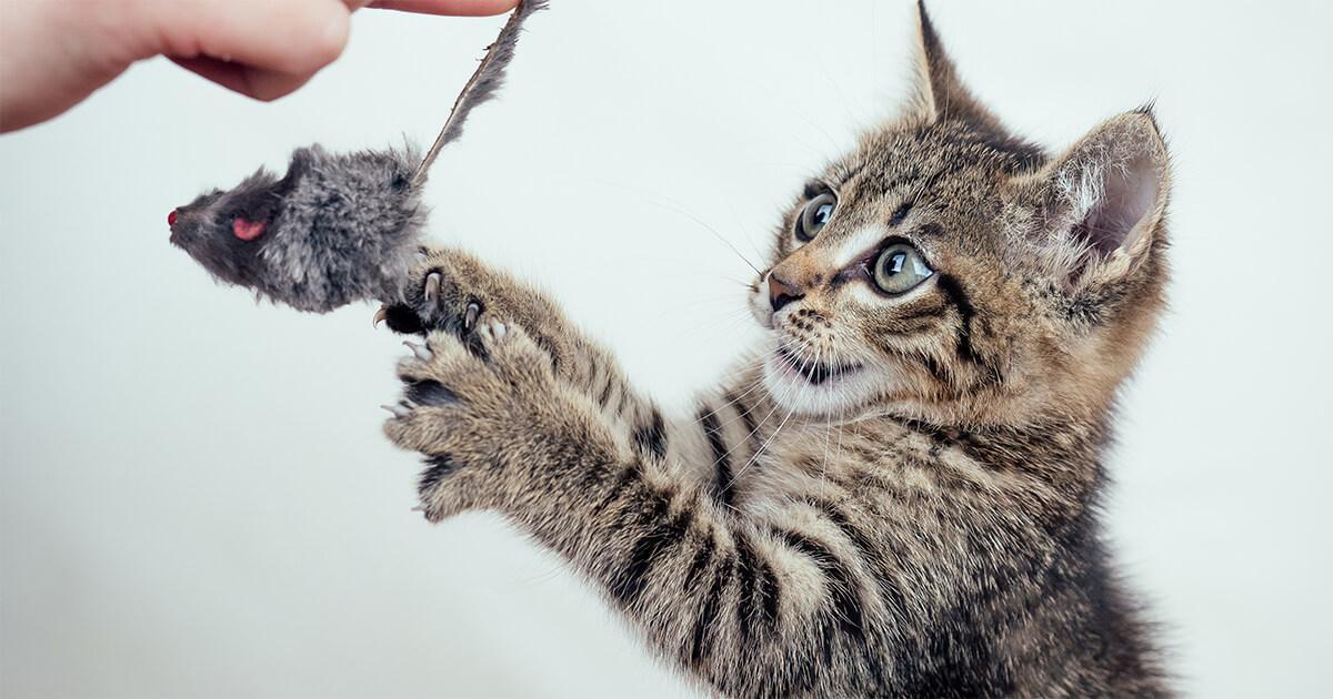 essayez différents jouets pour voir celui qui plait le plus à votre chat