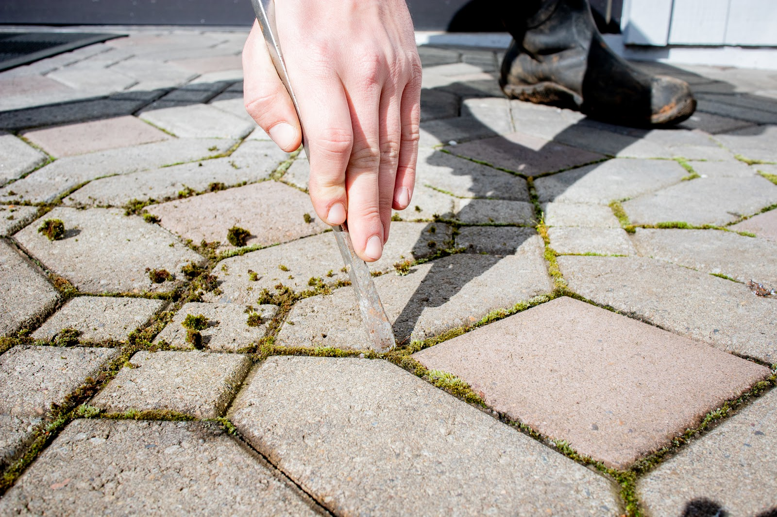Hand holding screwdriver scraping moss out of paving stone joints.