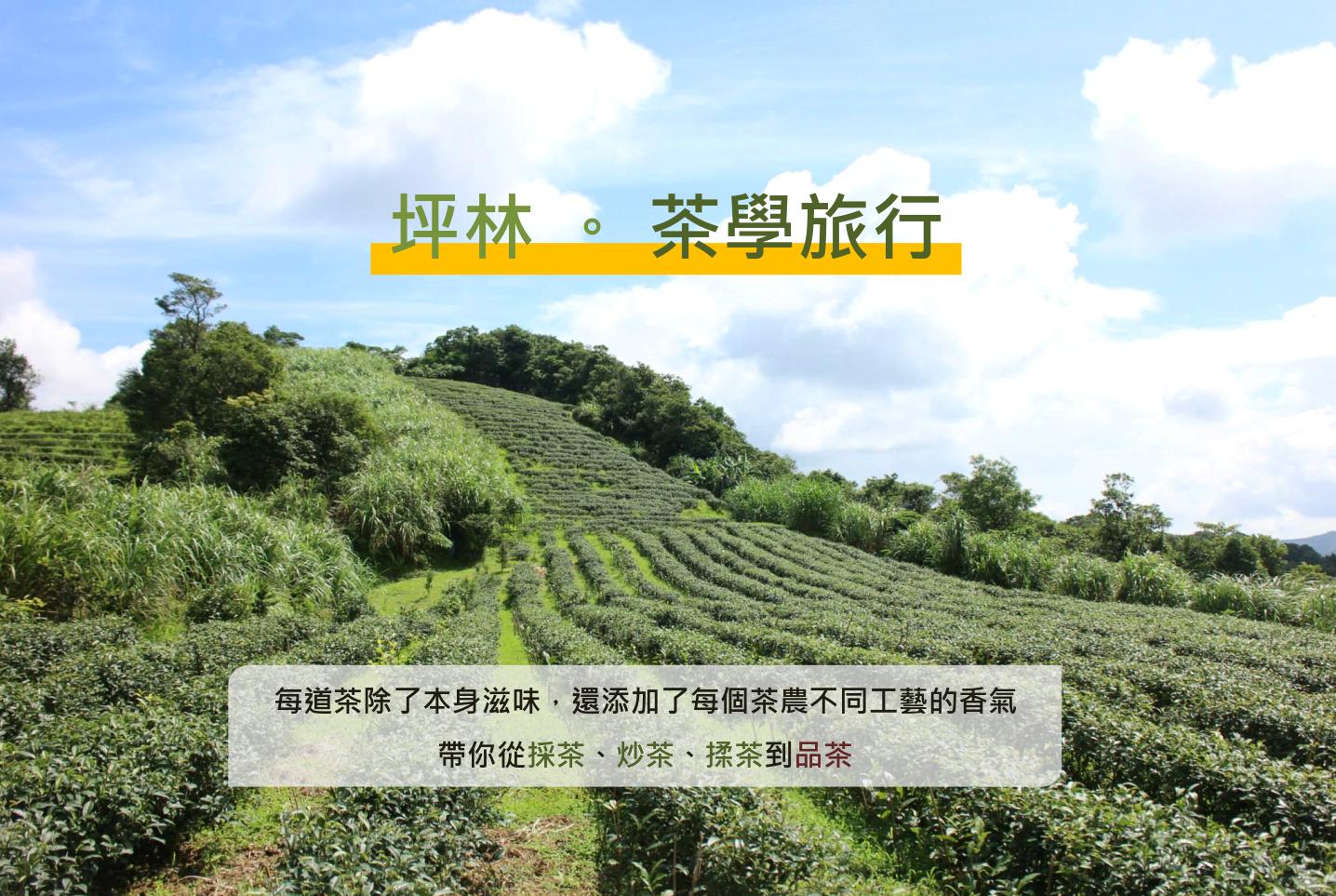 【台灣藍鵲茶×多扶假期】茶學小旅行-採茶、炒茶、揉茶、品茶