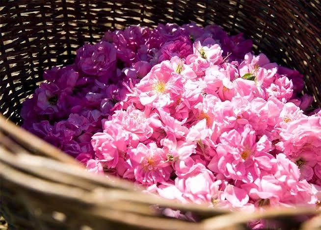 4. ดอกกุหลาบ (Rose Extract)