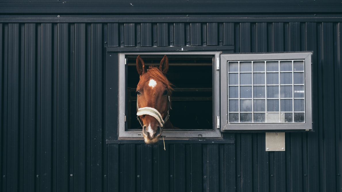Upgrade your barn by adding windows for light and a view.