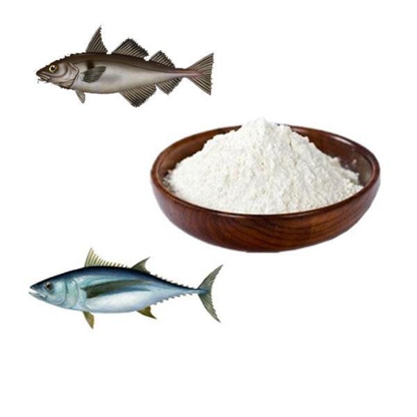 Cùng là collagen cá nhưng collagen cá hồi khác gì so với collagen cá tuyết - Ảnh 1