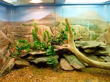 Image result for western hognose snake HIDE IN ENCLOSURE