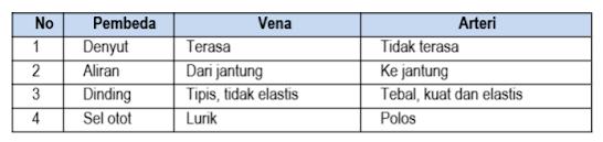 Sifat yang tepat dari pembuluh darah vena dan arteri ditunjukkan oleh nomor ....