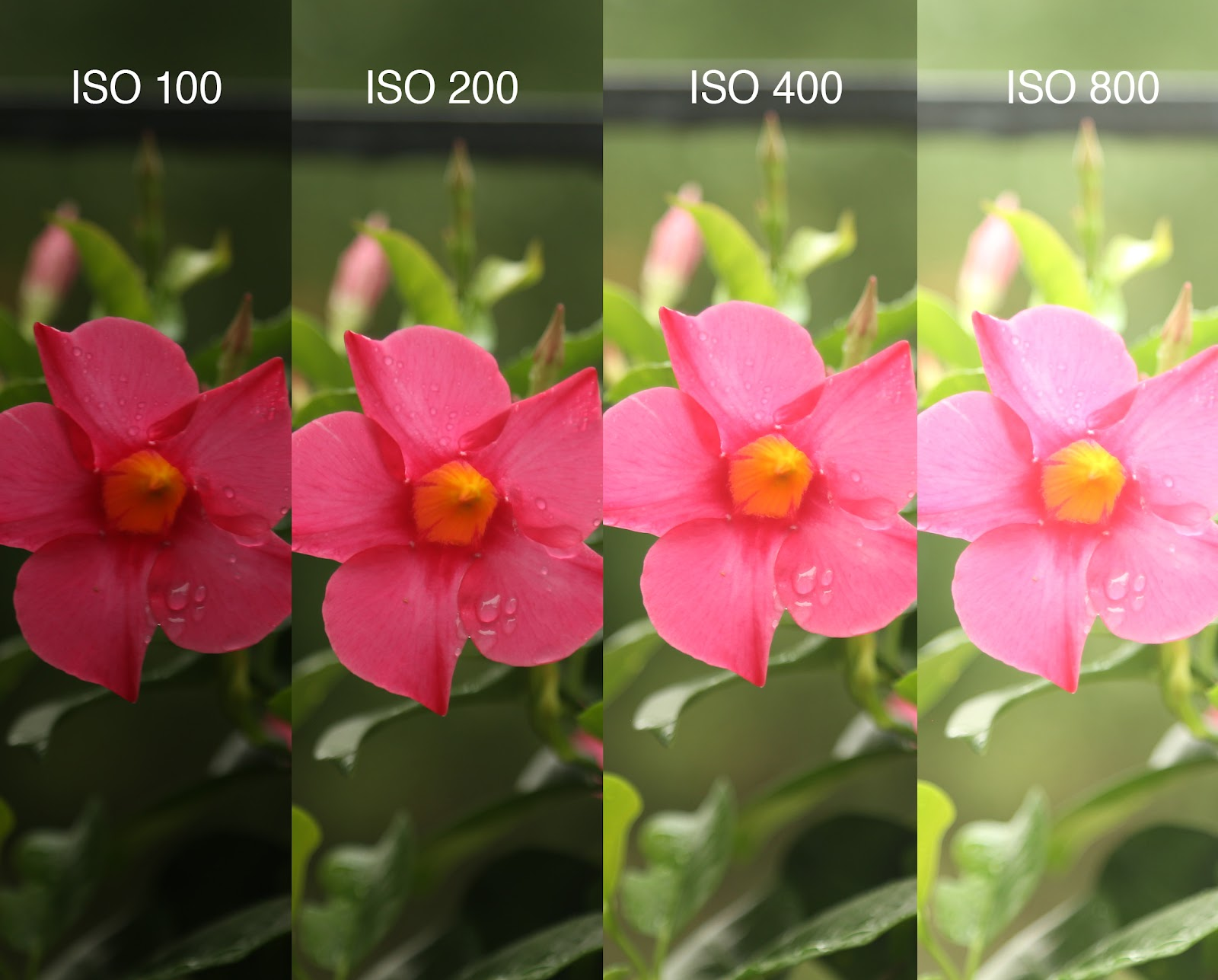 example of ISO