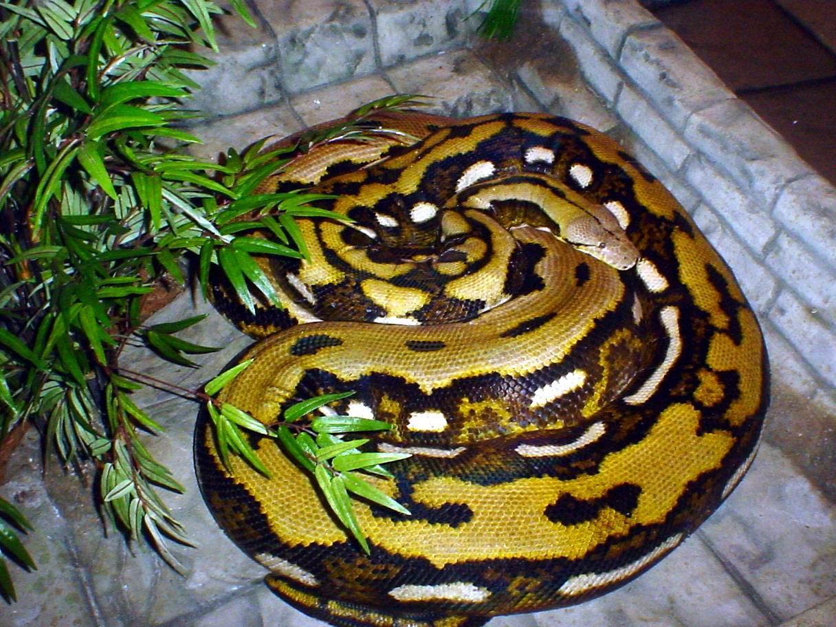 fluffy snake