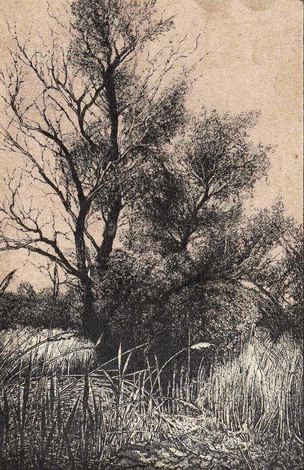 THE CSINCSE CREEK AREA IN THE LOWLANDS I - Miniatura, MMXII - Ink on carton - 5,51 X 3,15 in.jpg