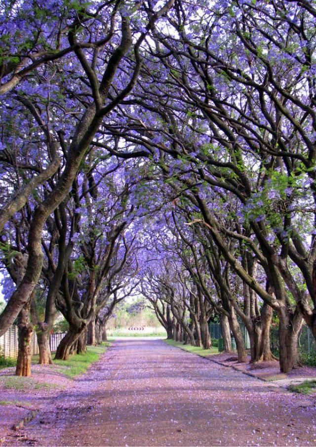 1_amazing-trees-15.jpg