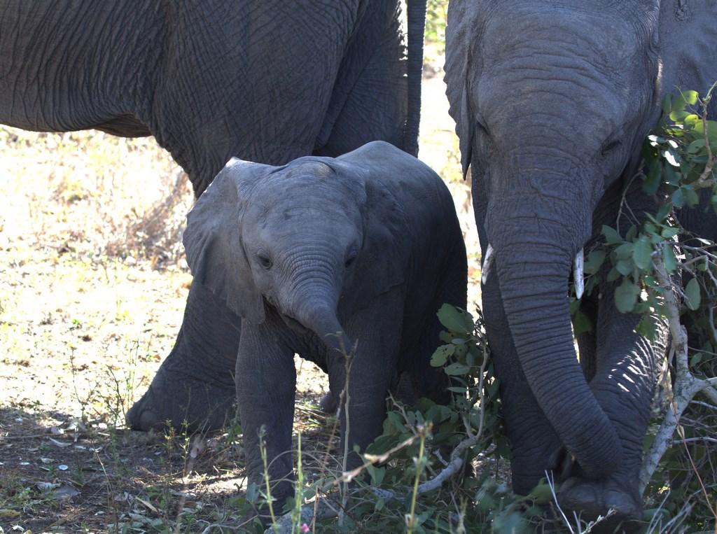 elephant (Copy).jpg