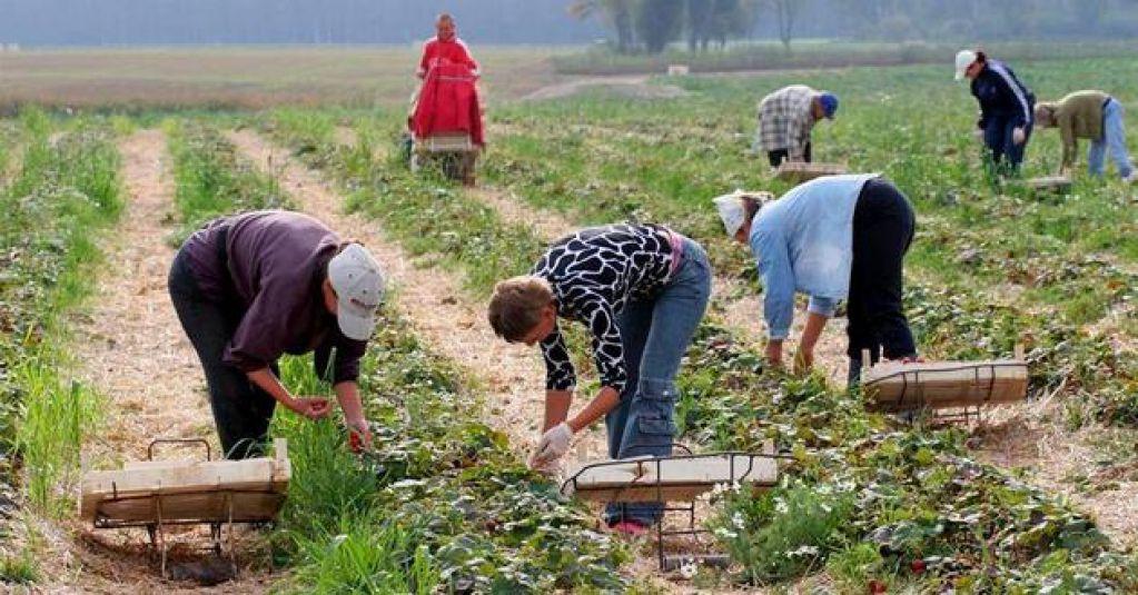 работа в поле