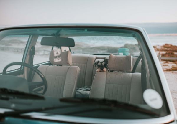 Como viajar com cachorro