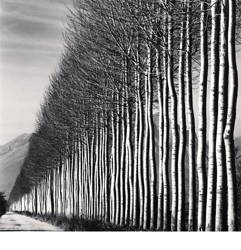 A black and white shot of an avenue of Poplar trees in Italy by Michael Kenna