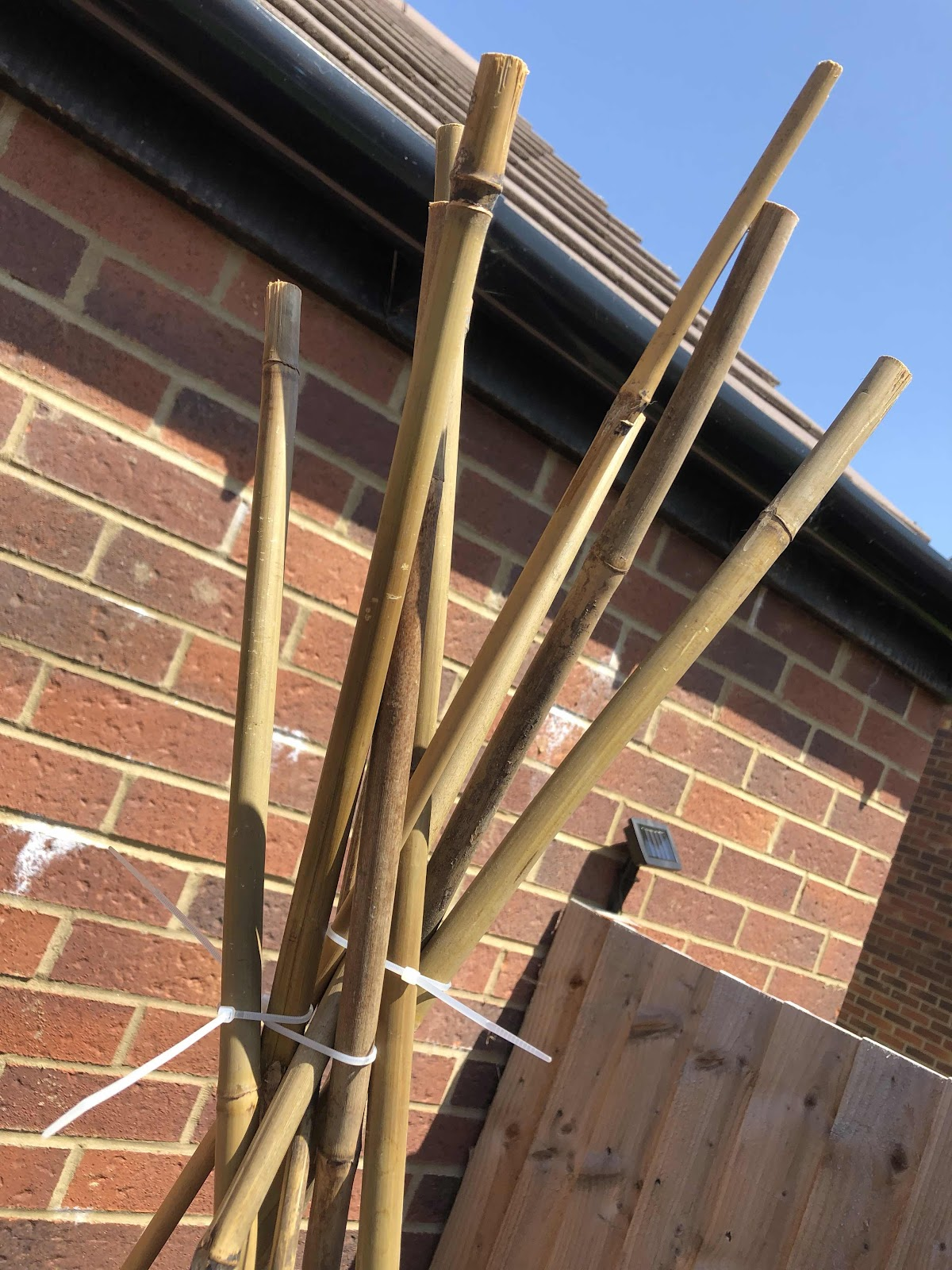 Fasten bamboo canes with cable ties