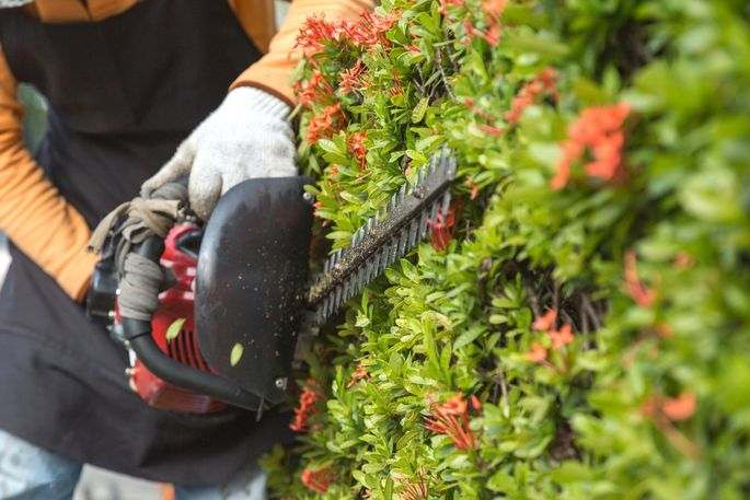 Don't forget to trim hedges and prune shrubs and flowers.