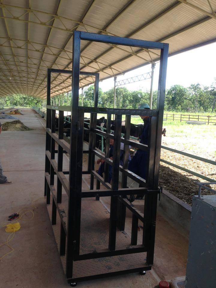 Cân điện tử có vai trò rất lớn trong chăn nuôi