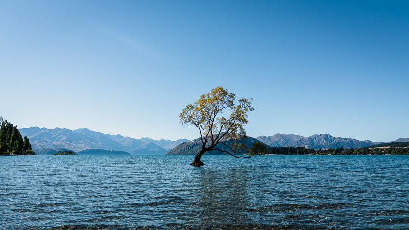 That Wanaka Tree.
