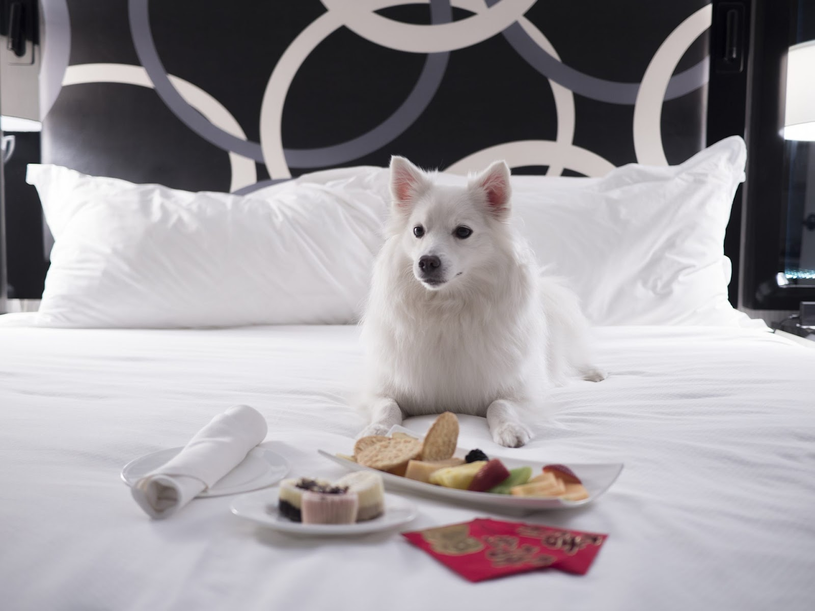 Dog Friendly Places in NYC Kimpton Muse Hotel