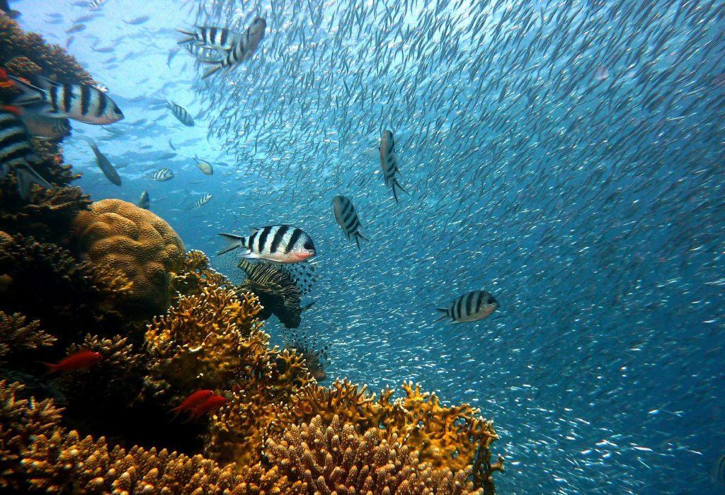significato cambiamento climatico barriera corallina