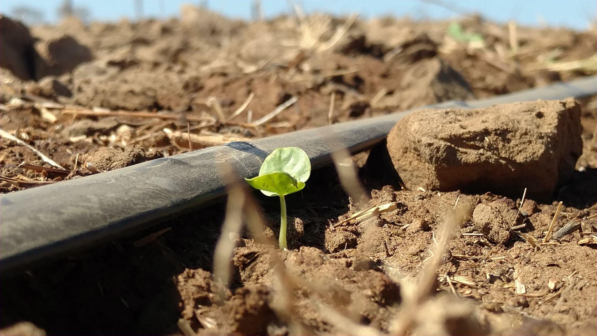 Irrigação da lavoura ocorre de forma mais precisa com a telemetria