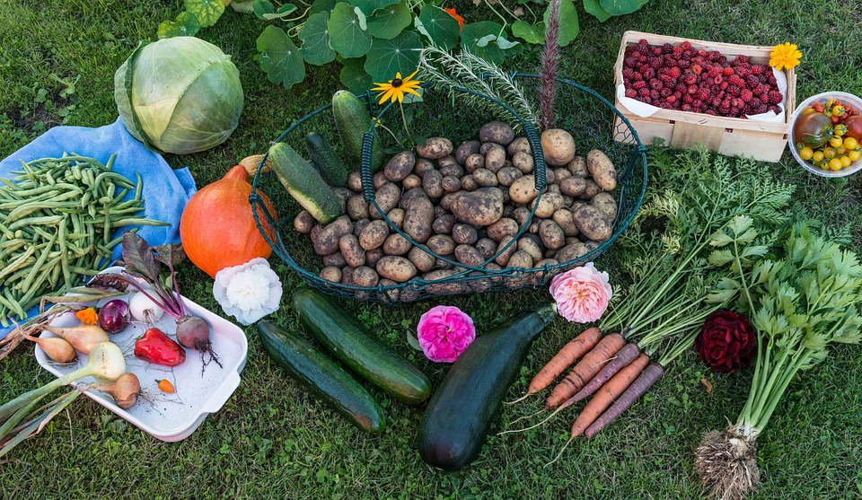 Fall Vegetables For Planting