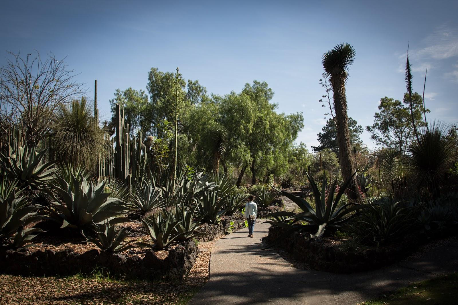 Jardin-Botanico-UNAM-7.jpg