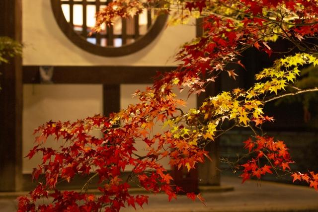 The beautiful autumn leaves in Kyoto.