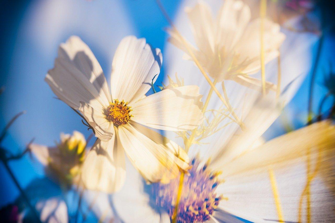 artistic flower photo