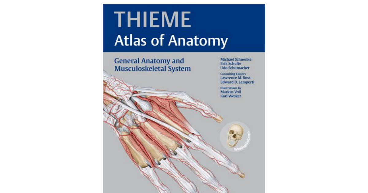 General Anatomy And Musculoskeletal System Choice Image - human body ...