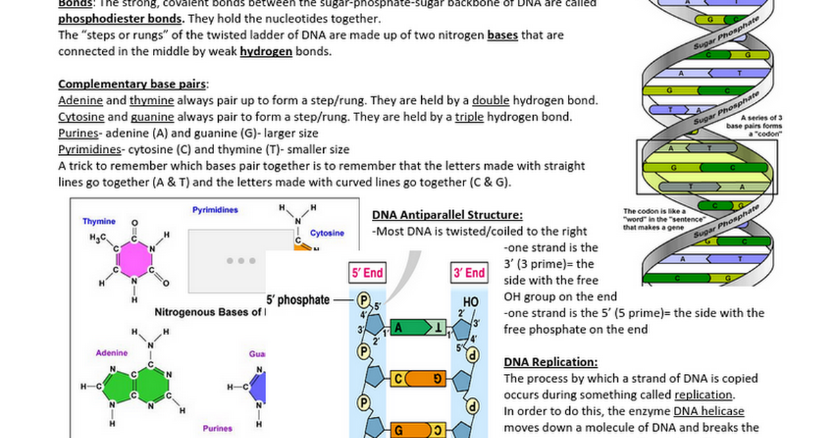 3 & 4 DNA, genetics and mutation Notes, questions and ...