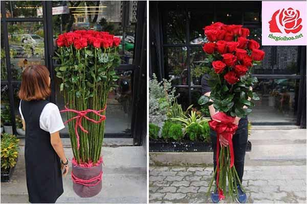 Dòng hoa hồng nhập khẩu cao cấp từ Ecuador
